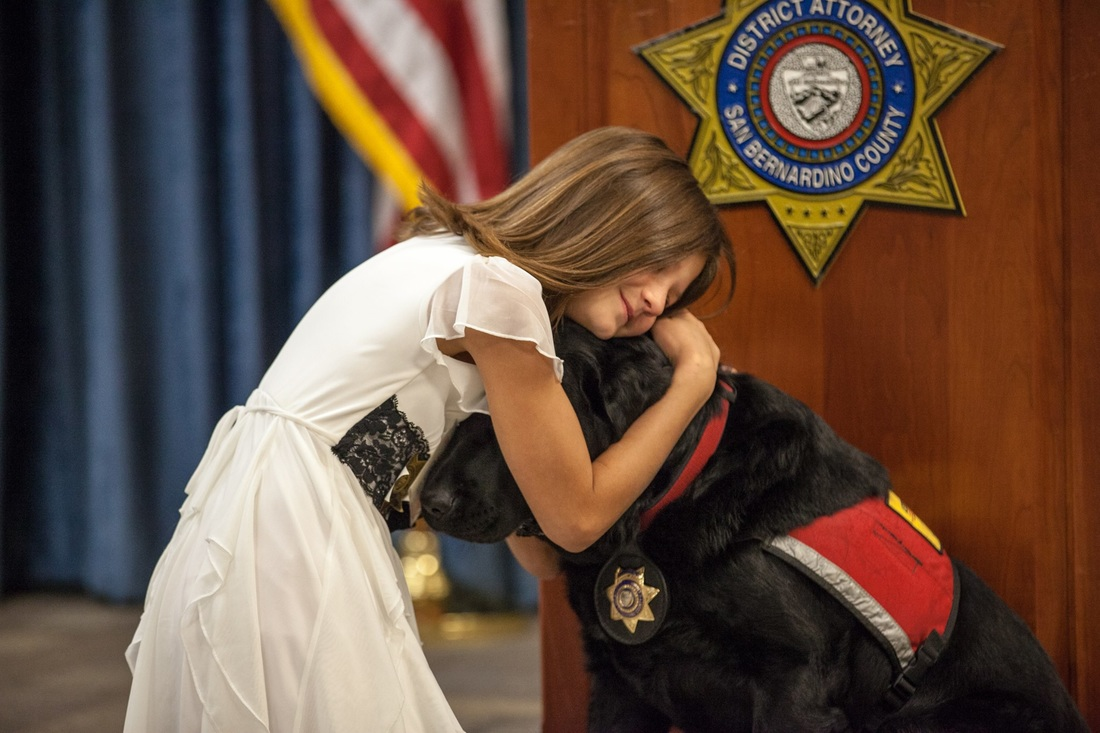 AN ADW Dog Can Work Within a Courthouse Helping Children and Other Special Victims.