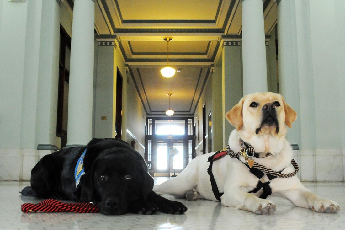 Courthouse Facility Dogs